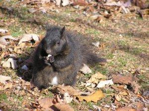 Gordo the Squirrel