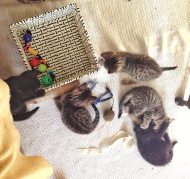 Five Fur Balls at play