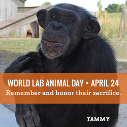 SaveTheChimps-Tammy_250