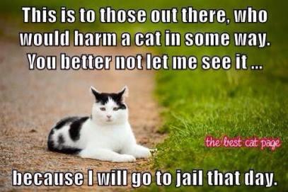 Cat advocacy