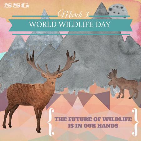 World Wildlife Day - March 3